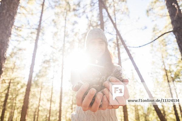 Frau hält Tannenzapfen in den Händen im Wald