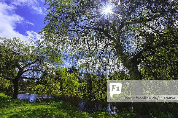 trees in Botanical Garden in British Columbia