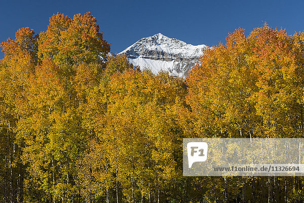 autumn forest and San Juan mountains in Colorado