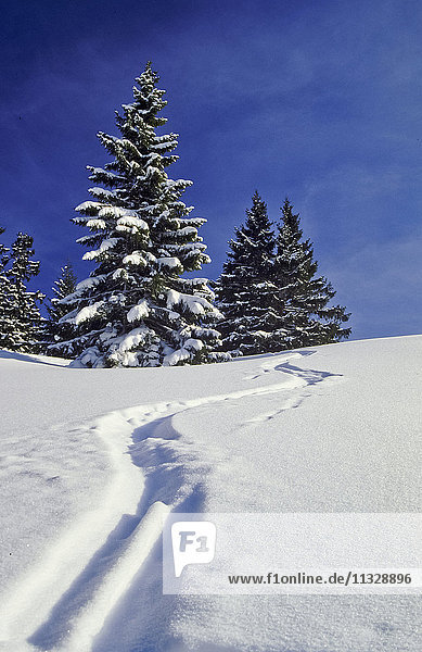 Ski track in winter on the mountain Unternberg in Ruhpolding