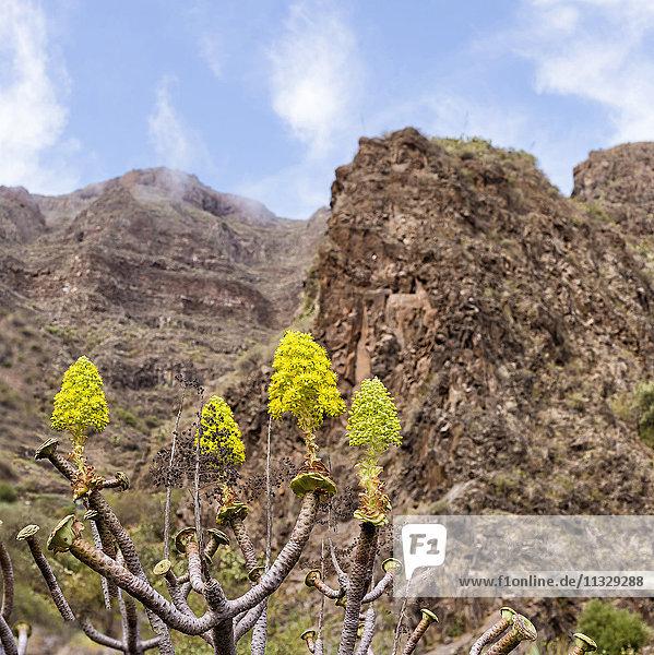 rocks in Agüimes in Gran Canaria  Canary Islands