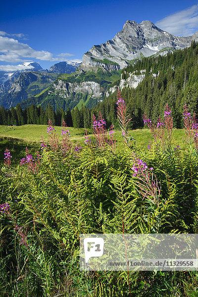 Ortstock and Tödi mountains in the canton of Glarus  Switzerland