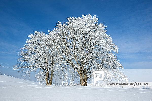 trees on a field in winter
