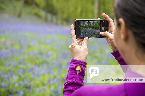 A woman takes a photo on her smartphone of a forest floor covered in bluebells in the Lake District  Cumbria  England  United Kingdom  Europe