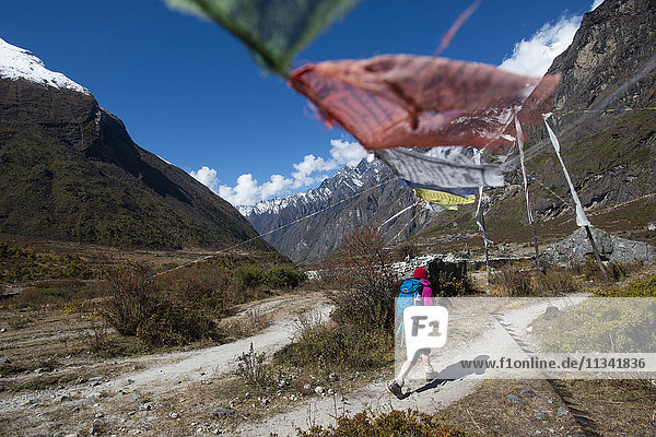 In the Langtang valley a woman treks under a string of prayer flags path between Langtang village and Kyanjin Gompa  Langtang Region  Himalayas  Nepal  Asia