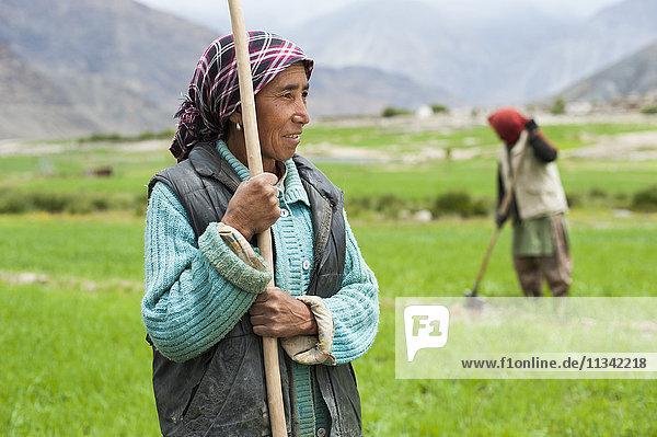 Women work with irrigation tools to even the flow of water into their wheat field  Ladakh  India  Asia