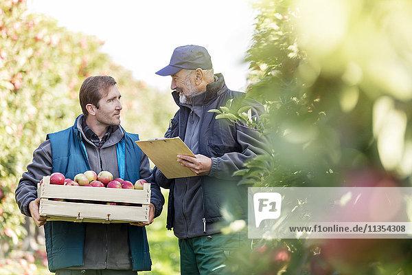 Männliche Bauern mit Scheffel Äpfel und Klemmbrett im Obstgarten sprechend