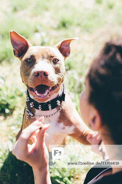 Über-die-Schulter-Porträt eines Pitbull-Terriers mit weiblicher Besitzerin