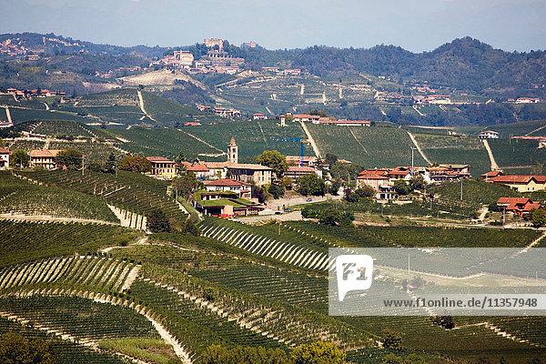 Weinberge  Nebbiolo  Langhe  Piemont  Italien