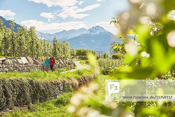 Ausgewachsenes Paar wandert entlang der Landstraße  Meran  Südtirol  Italien