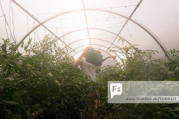 Frau benutzt Gießkanne zum Gießen von Pflanzen im Gewächshaus