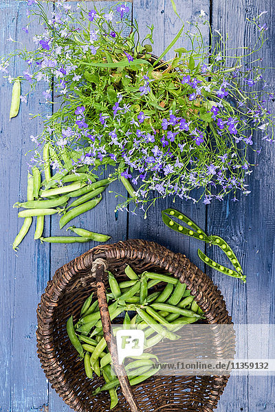 Basket of sugar snap peas next to potted plant  still life  overhead view