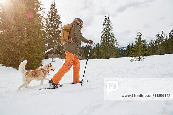 Mid adult man snowshoeing across snowy landscape  dog beside him  Elmau  Bavaria  Germany