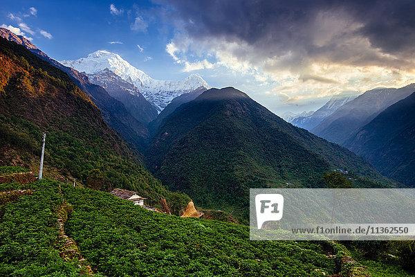 Chomrong Village Area  ABC trek (Annapurna Base Camp trek)  Nepal