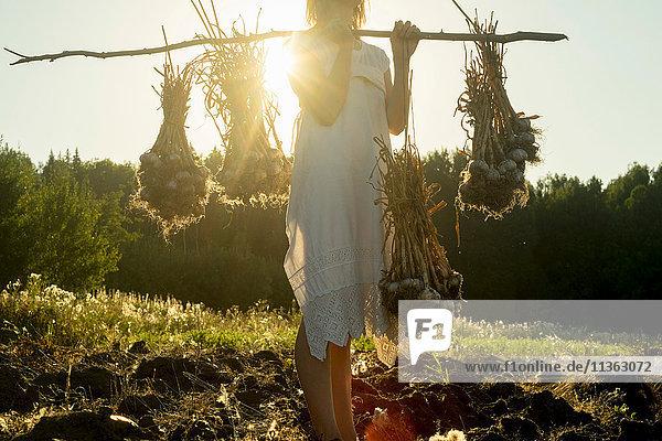Woman in field harvesting garlic  Ural  Russia