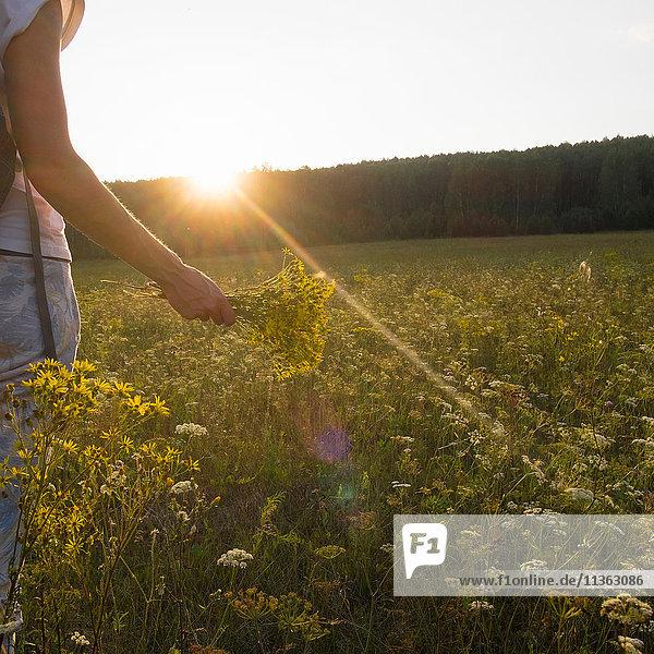 Schrägansicht einer Frau auf einer Wildblumenwiese mit einem Blumenstrauss in der Hand  Ural  Russland