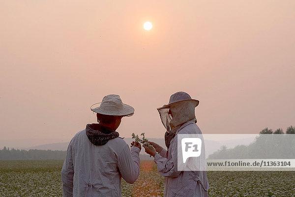Männliche und weibliche Imker inspizieren Pflanzen im Blumenfeld in der Abenddämmerung  Ural  Russland