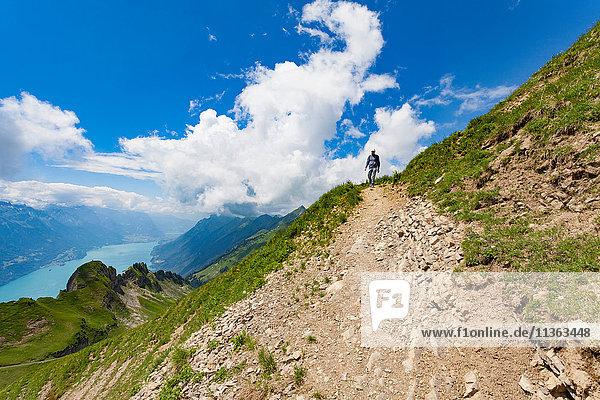 Mann auf Bergpfad  Brienzer Rothorn  Berner Oberland  Schweiz