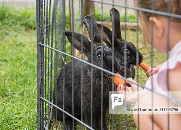 Kinder  die Kaninchen mit Karotten füttern