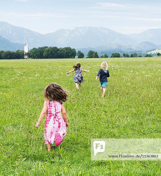 Rückansicht der im Feld laufenden Kinder  Füssen  Bayern  Deutschland