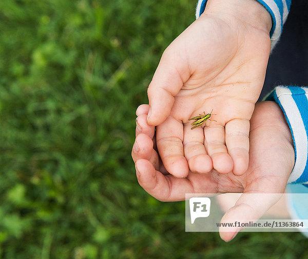 Junge hält Insekt in den Händen