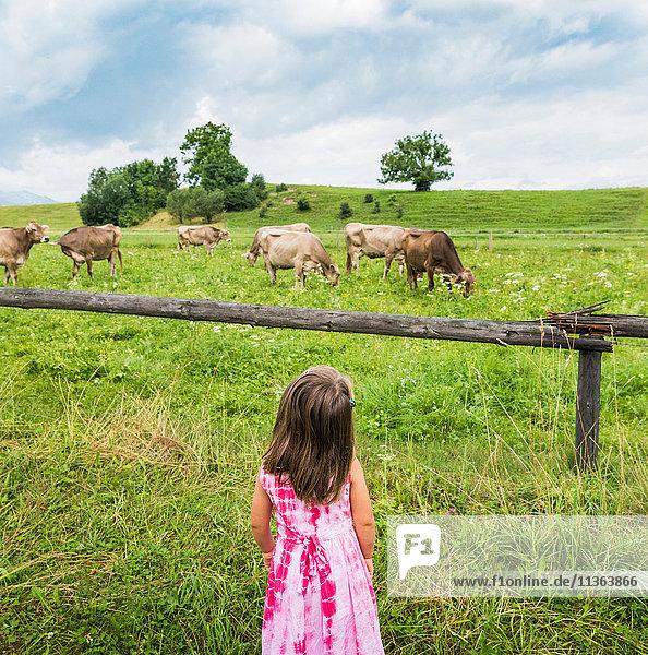 Realansicht eines Mädchens  das auf Kühe schaut  die auf der Weide grasen  Füssen  Bayern  Deutschland