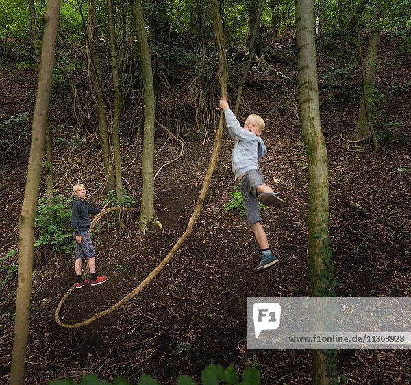 Junge im Wald schwingt auf Baum