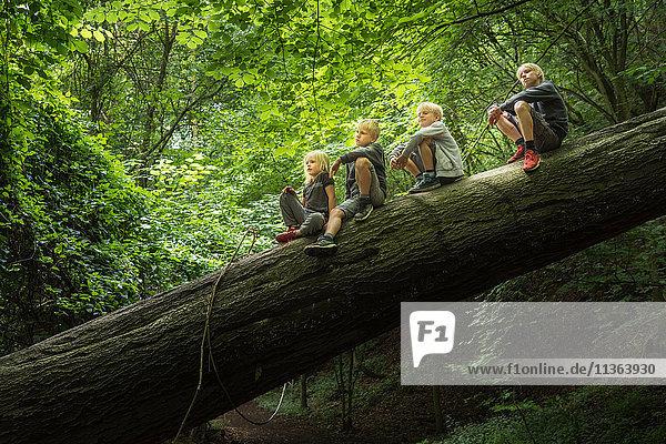 Junge im Wald sitzt auf umgestürztem Baum