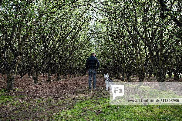 Rückansicht eines Mannes  der mit einem Hund im Wald spazieren geht  Woodburn  Oregon  USA