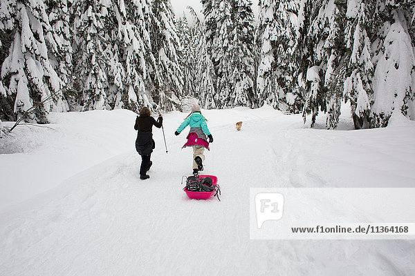 Boy and girl walking in snow  pulling sled  rear view