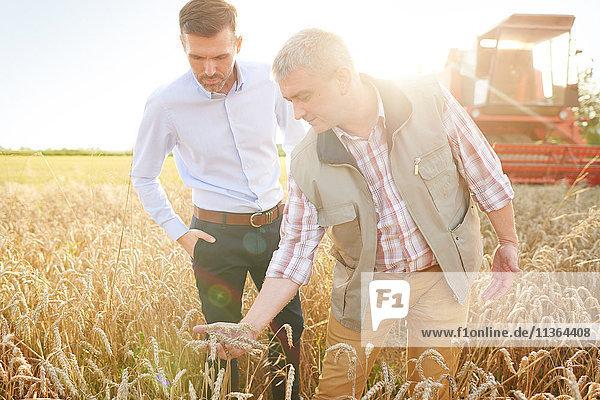 Landwirt und Geschäftsmann bei der Qualitätskontrolle von Weizenfeldern
