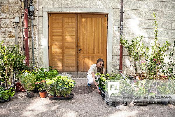 Weibliche Touristin betrachtet Topfpflanzen am Marktstand  Split  Dalmatien  Kroatien