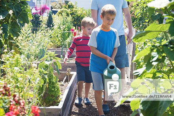 Mann und zwei Söhne bewässern Pflanzen im Kleingarten