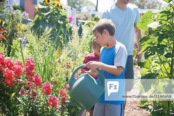 Mann und zwei Söhne gießen Blumen im Schrebergarten