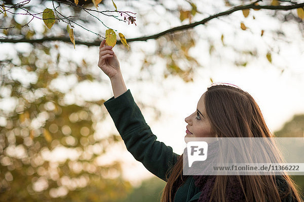 Young woman in rural setting  touching autumn leaf on tree
