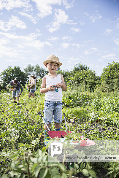 Small boy holding switchblade with wheelbarrow in community garden