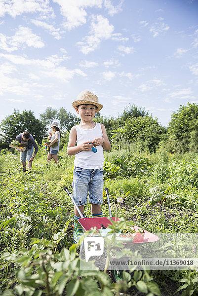 Small boy holding switchblade with wheelbarrow in community garden