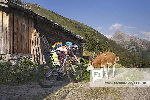 Young couple of mountain bikers stroking calf  Zillertal  Tyrol  Austria