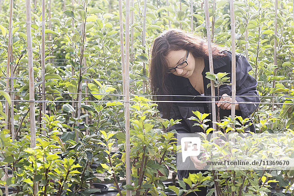 Young woman examining plants in a garden