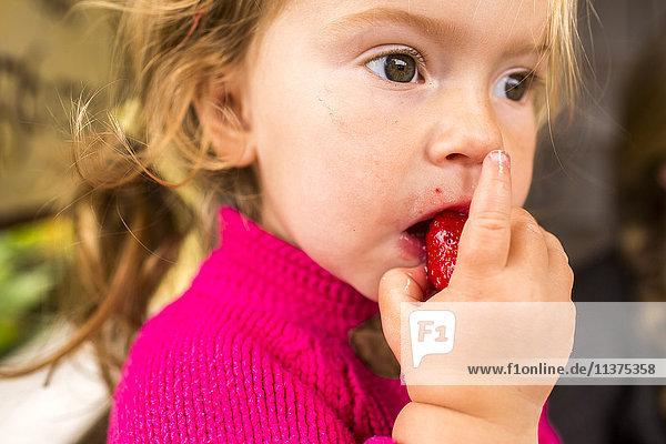 Caucasian girl eating strawberry