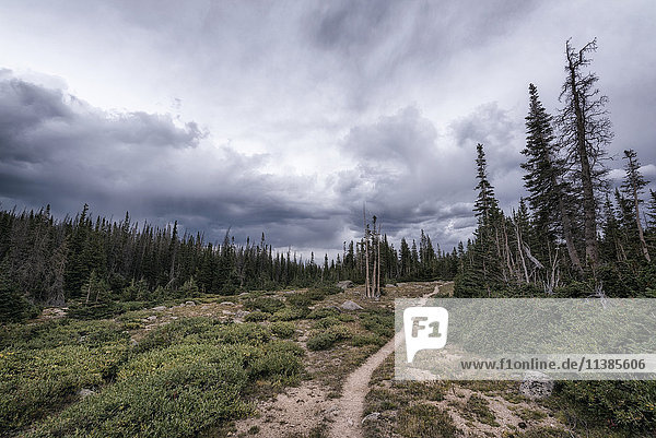 Clouds over trail in forest landscape