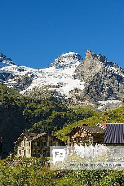 Berggasthof Obersteinberg  hinten das Tschingelhorn mit Schnee  hinteres Lauterbrunnental  Schweizer Alpen Jungfrau-Aletsch  Berner Oberland  Schweiz  Europa