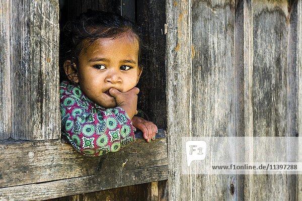 Portrait eines kleinen Mädchens  Ober Marsyangdi Tal  aus dem Fenster schauen  Bagarchap  Manang  Nepal  Asien