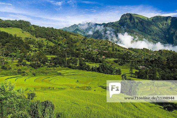 Agrarlandschaft mit grünen Reisfeldern  Terassenfeldbau  Chitre  Oberers Kali Gandaki Tal  Myagdi  Nepal  Asien