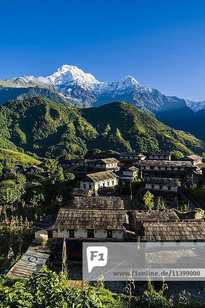 Bergdorf mit dem Annapurna Südgipfel  links  und Himchuli  rechts  Ghandruk  Kaski District  Nepal  Asien