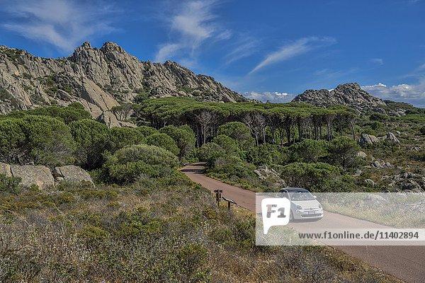 Auto auf Straße in Berglandschaft mit Pinien  Insel Caprera  Provinz Olbia-Tempio  Sardinien  Italien  Europa