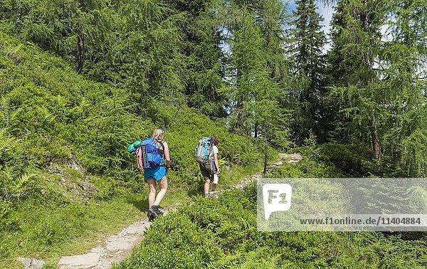 Wanderer auf einem Wanderweg durch Lärchenwald  Schladminger Tauern  Schladming  Steiermark  Österreich  Europa