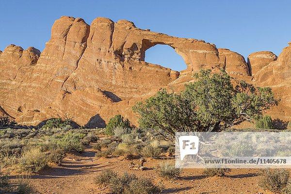 Felsbogen Skyline Arch  Arches National Park  Utah  USA  Nordamerika