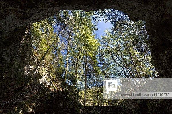 Riesenburg Höhle im Tal der Wiesent  Doos  Fränkische Schweiz  Bayern  Deutschland  Europa