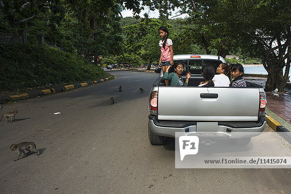 'Some monkeys on the road  some local tourists stop their car to give them food; Kep  Cambodia'